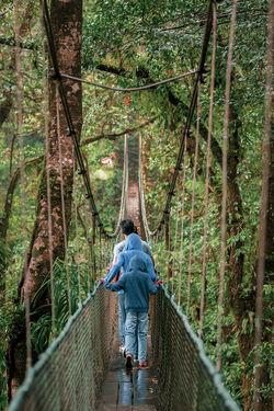 Puentes colgantes en heliconias de bijagua alajuela Costa Rica Adventure Bijagua Bridge - Man Made Structure Day Footbridge Forest Nature Outdoors Puente Colgante Tree Walking Summer Exploratorium