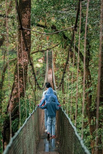 Rear view of family walking on footbridge in forest