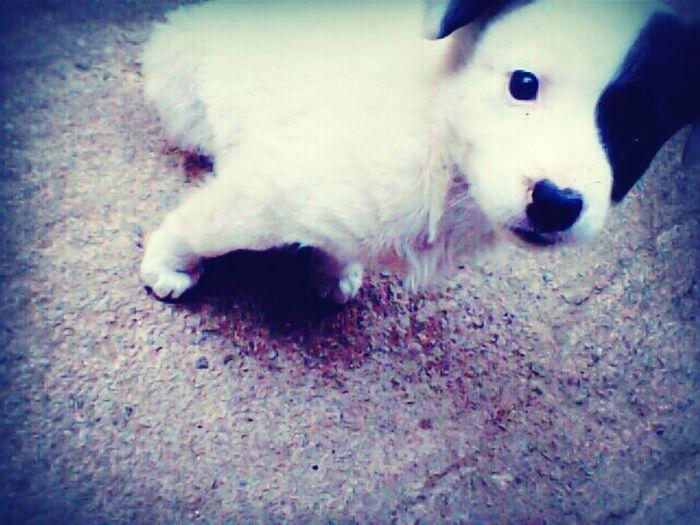 miss Orio...shes a beaut! Amandapanda animals