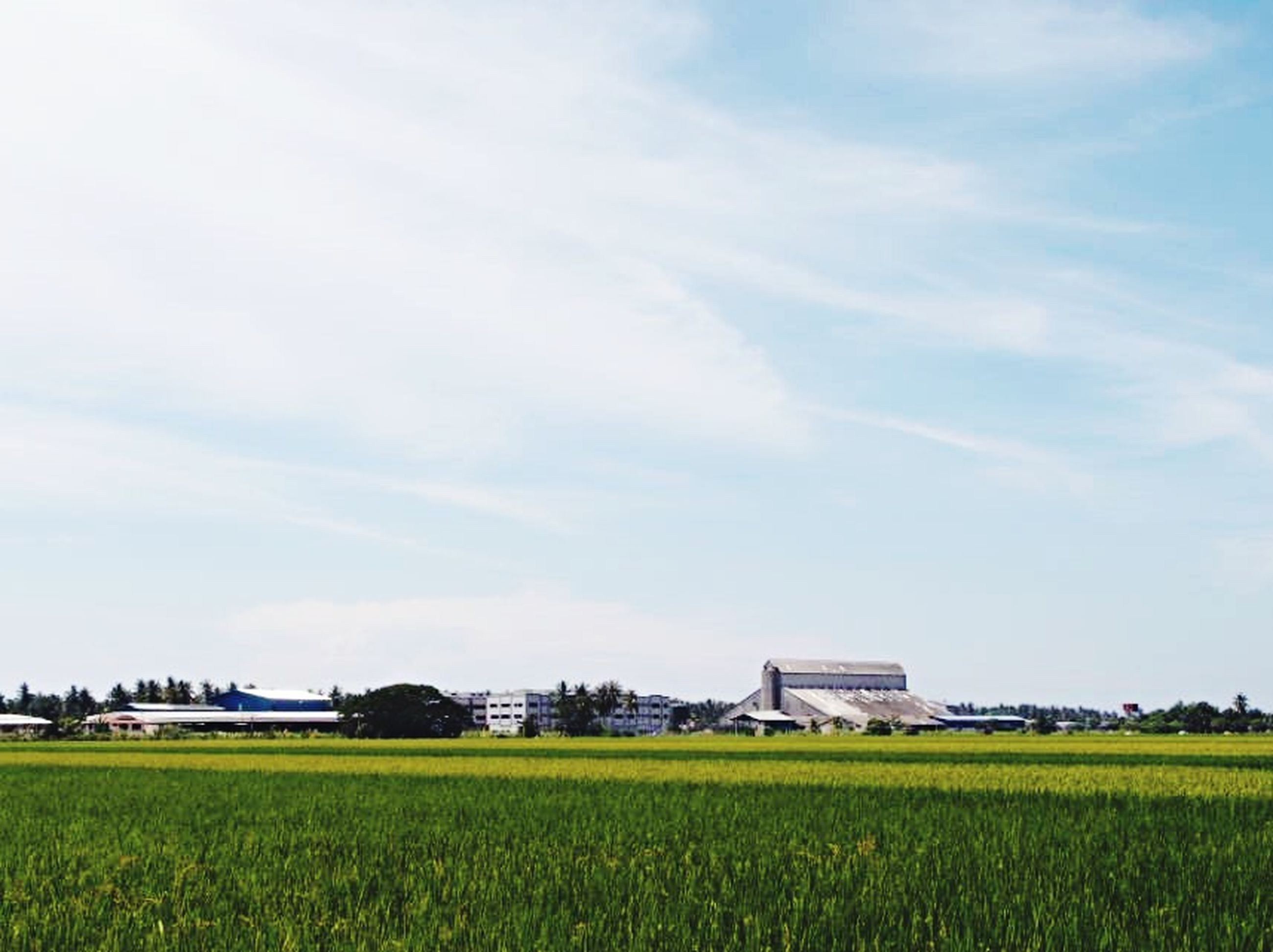 field, agriculture, rural scene, farm, growth, landscape, building exterior, architecture, crop, built structure, sky, beauty in nature, yellow, nature, cultivated land, grass, tranquil scene, tranquility, flower, green color