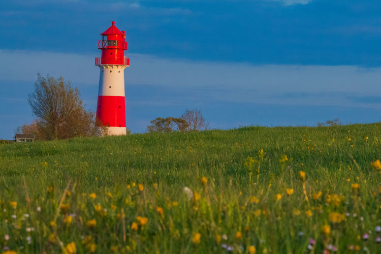 Flower Blossom Lighthouse Rapeseed Blossom RapeFlowers Cloud - Sky Spring Countryside Village Life Village Germany Built Structure Tower Outdoors Guidance Land Sky Architecture Building