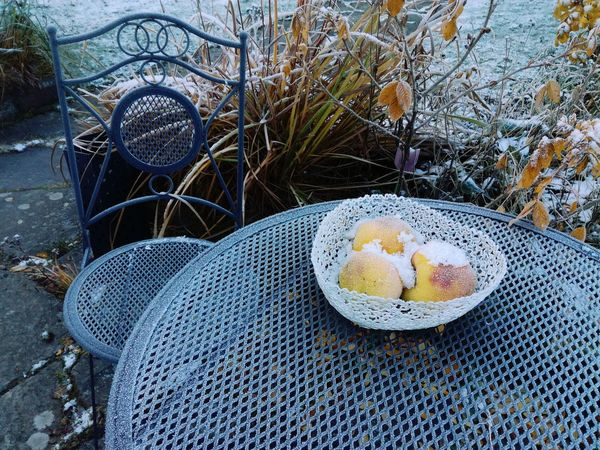 No People Nature Outdoors Day Healthy Eating Close-up Apples Chair Winter Table Cold Ice Frost Chilly Colors Fruit Frozen Nature Still Life