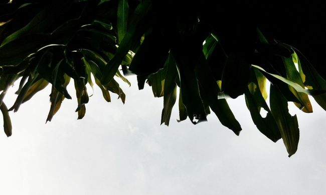 Leaf Nature No People Plant Low Angle View Close-up Beauty In Nature Flower Hanging Growth Outdoors Tree Day Freshness Sky