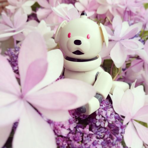 Aibobox AIBO Sony Sonyaibo ERS-300 Happiness Nature Outdoors Flower Smiling Nature Day Pink Color Hydrangea No People Close-up Millennial Pink