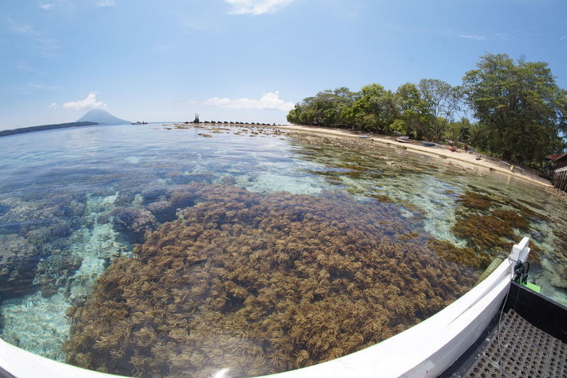 Fish eye view of coral in sea against sky