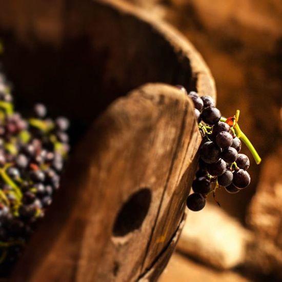 Valpolicella Pigiatura Organicwine Produzionepropria DanieleSalvagno Lafontanina Amarone Wine 😚 Vino Winemaker Vineyard Indipendentipernatura