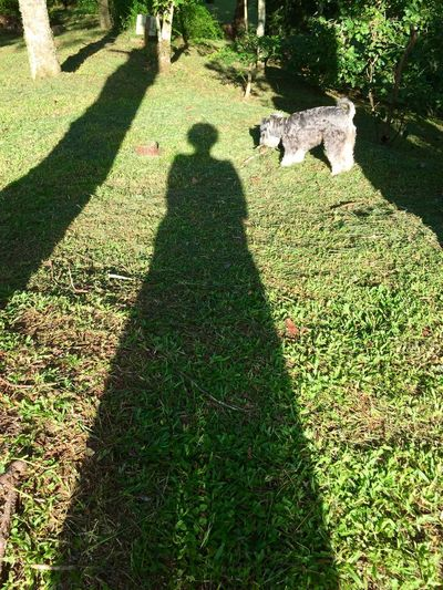 Light And Shadow Shadow_collection Sun And Shadow shadow doll and the dog Dogs Grass Nature_collection Naturephotography Woomen Shadow Abstract Shadow Composition