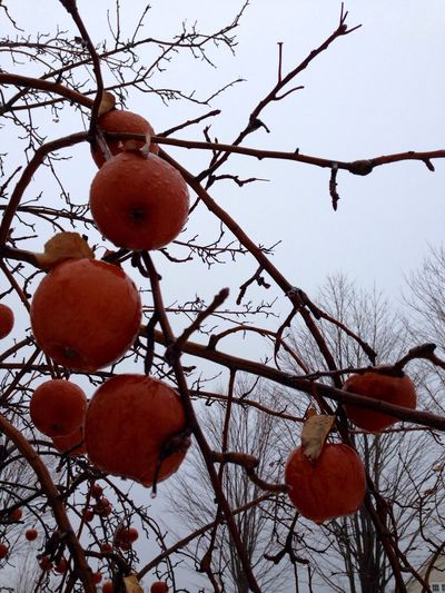 In the orchard this morning... apples weather rain and fog. Mother Nature Is My Jailer... And My Mistress Nature_perfection