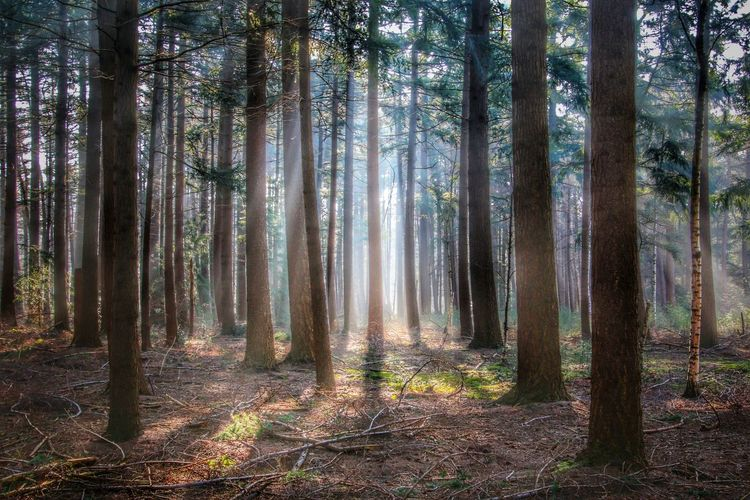 Goodmorning EyeEm Streamzoofamily Nature Trees Light And Shadow Mist Forest TreePorn Nature Photography Naturelovers EyeEm Gallery Lightbeam Nature_perfection Showcase April