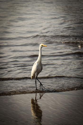 Bird Water