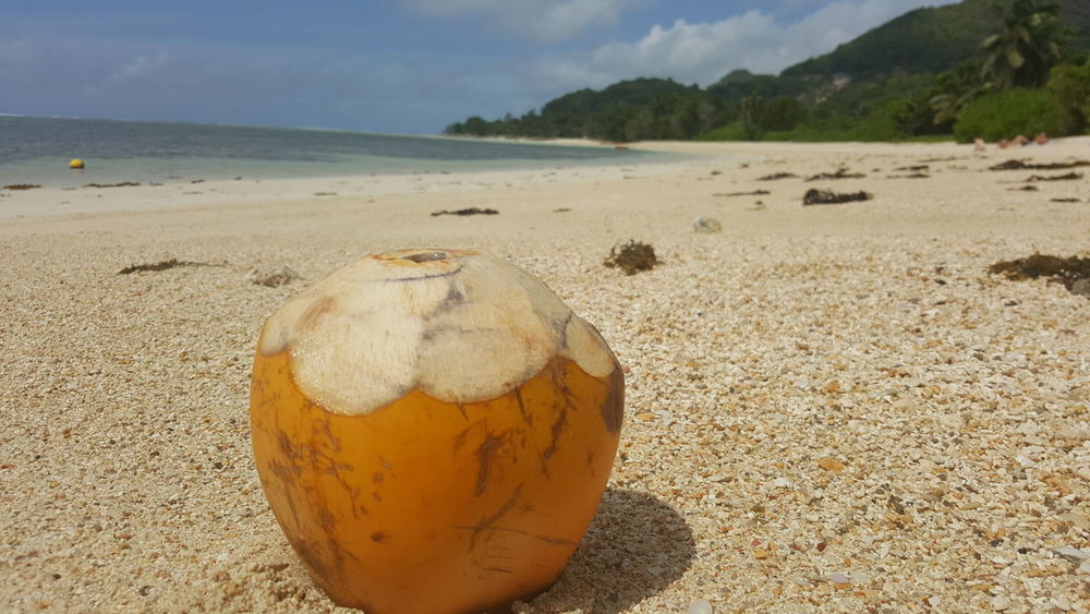Nofilter Sand Beach Day No People Sea Nature Outdoors Water Close-up Seychelles Islands Sunlight Seychelles Tranquility Sunny EyeEm Selects No Filter, No Edit, Just Photography Tourist Beauty In Nature Island Paradise Summer Travel Destinations Beach Life Beach Photography Coconut