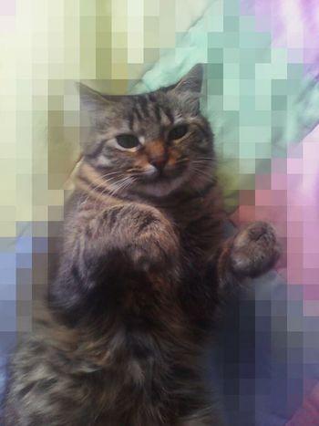 Colors Of Autumn Cat♡ Cats Cat Lovers Cat animals Gato😽