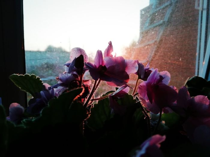 #goodmorning #morning #flowers #beautiful #dawn City Flower Cityscape Skyscraper Flower Head Window Architecture Close-up Sky Building Exterior Plant Life Petal Cosmos Flower Autumn Mood
