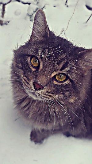Beautiful Cat Cute Cats Fliters Cats 🐱 Cat Eyes Pets ♡ Snow ❄