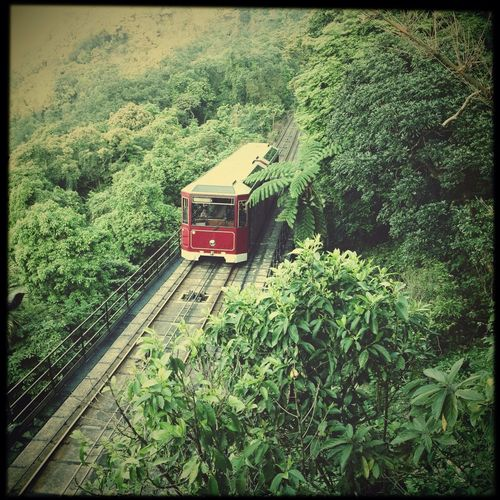 Peak Tram NEM Submissions Trees Hong Kong The Minimals (less Edit Juxt Photography)