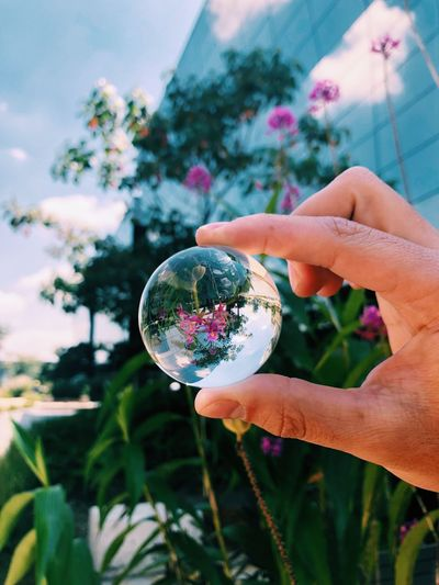 Cropped Hand Holding Crystal Ball Against Plants