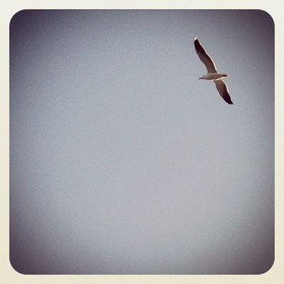 Just simple #bird ? #fly #seagull #minimal #whitespace #ubiquography #jj_forum #ireland #gf_ire #bluesky #beach #malahide #earlybirdlove #ebstyles_gf Malahide  Beach Gf_ire Bird Minimal Ireland Fly Seagull Whitespace Bluesky Earlybirdlove Jj_forum Ubiquography Ebstyles_gf