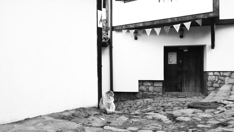 Cat Old City Old Buildings Plovdiv Cats Of EyeEm Blackandwhite Black And White Black & White Black And White Photography Black And White Old-fashioned Pavedstreet Paved Path Ancient Ancient Civilization Flags White Color White Painted Walls Door Wooden Door Rotting Destruction Doorway Bad Condition Old-fashioned Abandoned Business Finance And Industry Damaged Run-down Door