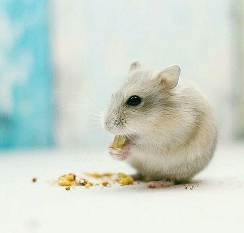 Hamster 💞