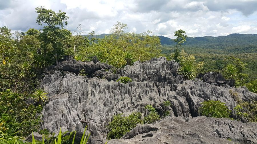 Cloud - Sky Tree Nature Outdoors Growth Day No People Sky Beauty In Nature Water Grass Freshness Rocks Rocky Mountains Coral Rock เขาหินปะการัง Landscape Scenery Travel Destinations