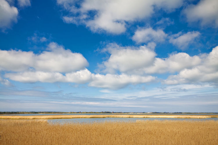 Scenic view of lake by reeds against cloudy sky