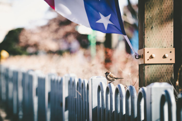 Close-up of flags hanging on fence
