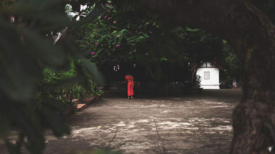 Rear view of woman standing by tree