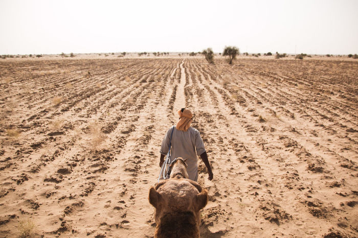 Rear view of man with camel walking on land