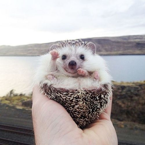 Animal Themes Day Hedgehog Holding Nature One Animal Outdoors Sky Water