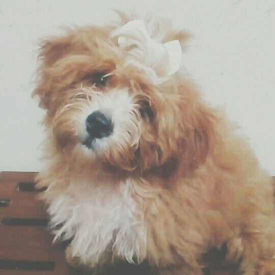 Maia? Hey Willow I Love My Dog Dog Sherlock The Dog