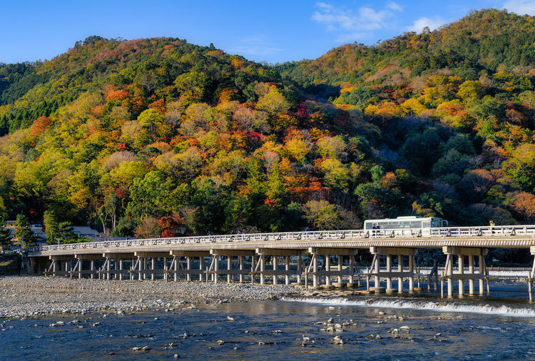 Tree Plant Autumn Change Beauty In Nature Nature Water Growth Day Built Structure Scenics - Nature Tranquil Scene Architecture Non-urban Scene Tranquility Mountain Bridge Connection Bridge - Man Made Structure Outdoors Autumn Collection Japan Kyoto Arashiyama Autumn
