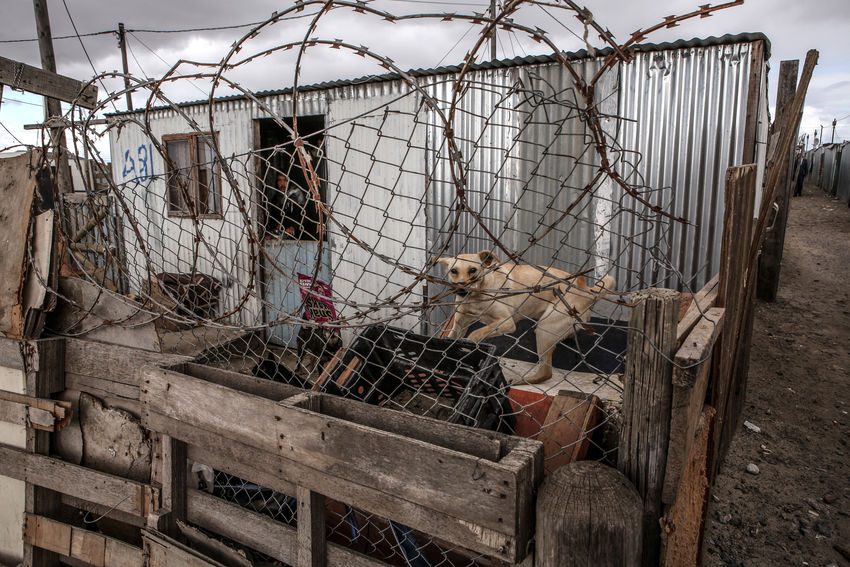 Watchdog barking at me while walking through the streets of a township Barbed Wire Blikkiesdorp Building Exterior Clouds Dog Fence Grey Sky Hut Poverty Security Tin