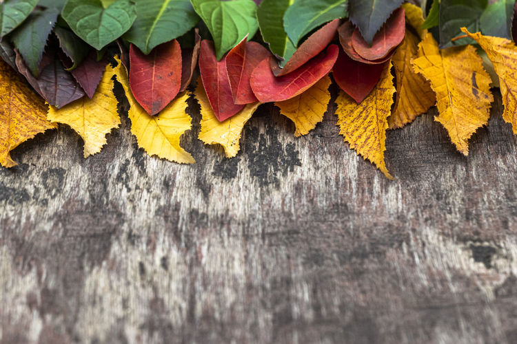 Close-up of multi colored leaves hanging on wood