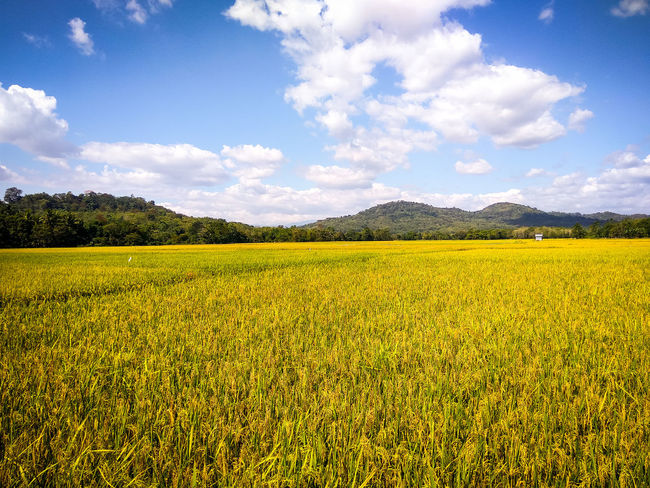 Rice Field and Hills Rice Field Maros  Hills Sky Cloud - Sky Landscape
