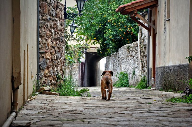 Rear view of stray dog in alley