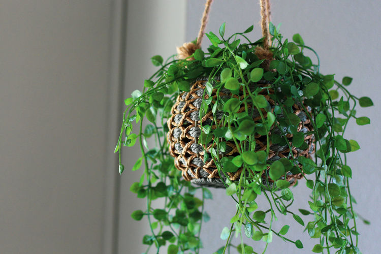 Close-up of potted plant hanging on wall