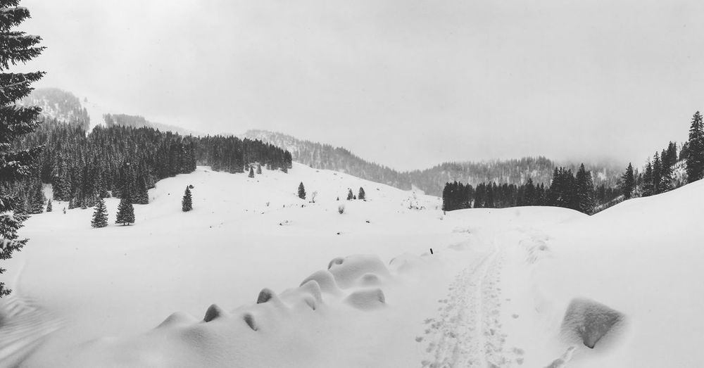 Tracks EyeEm Selects Snow Winter Cold Temperature Nature Beauty In Nature Weather White Color Tranquility Outdoors Tranquil Scene Mountain No People Tree