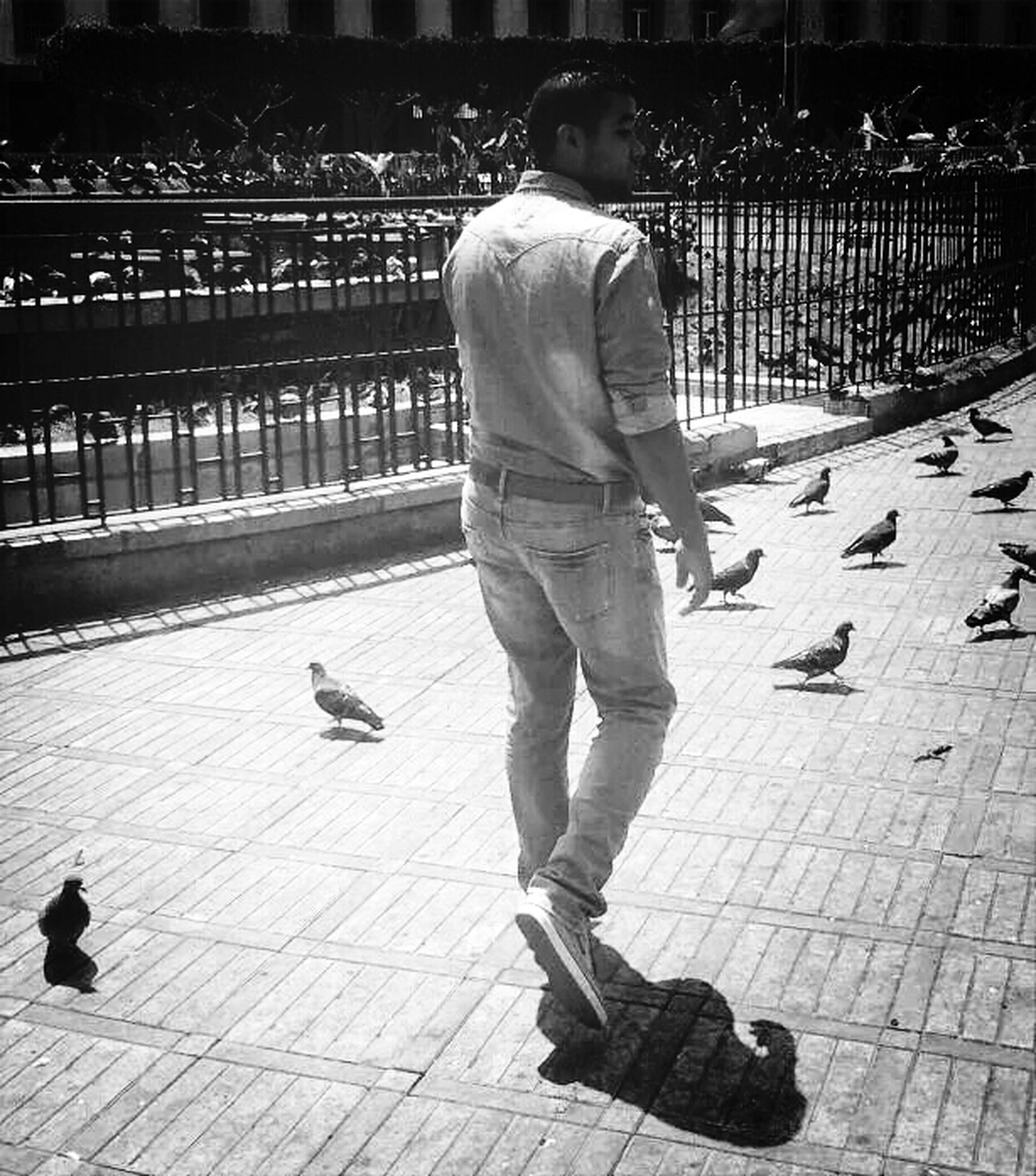 full length, lifestyles, bird, leisure activity, casual clothing, men, childhood, animal themes, walking, street, boys, rear view, sunlight, sidewalk, togetherness, shadow, city, person