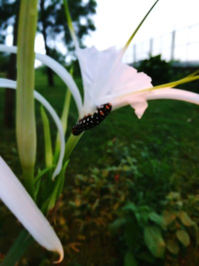 Insect No People Plant Close-up Nature Outdoors Flower Day One Animal Grass Animals In The Wild Animal Themes Fragility Flower Head Freshness