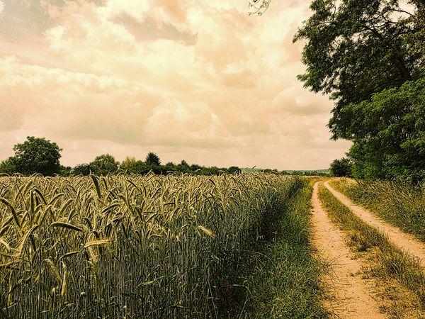 Out of Aschaffenburg. .. The Environmentalist – 2014 EyeEm Awards EyeEm Nature Lover Our Planet NEM Landscapes