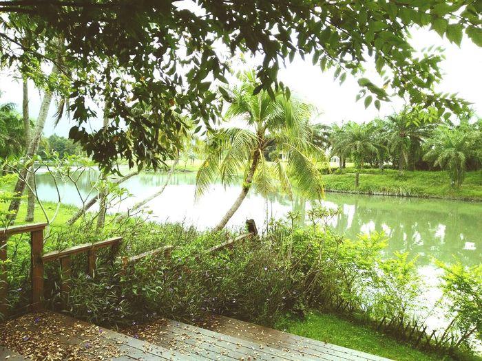 Taiwan Hualien Scenery Beautiful October Date Family Sister Friends Travel Tree Lake Laid-back 台灣 花蓮 旅遊 風景 愜意 旅行 出遊 走走 放鬆 雲山水 散心 談心