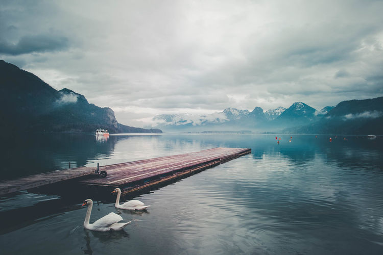 Swans swimming in lake against sky