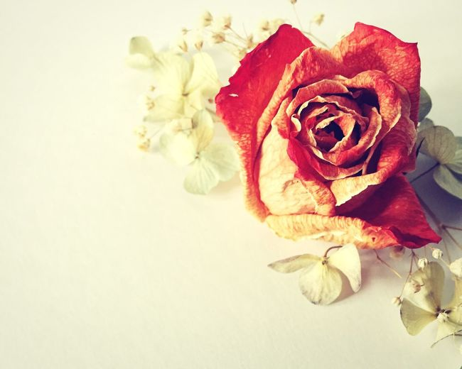 Rose🌹 Flower Dried Flowers Babys Breath Hydrangea