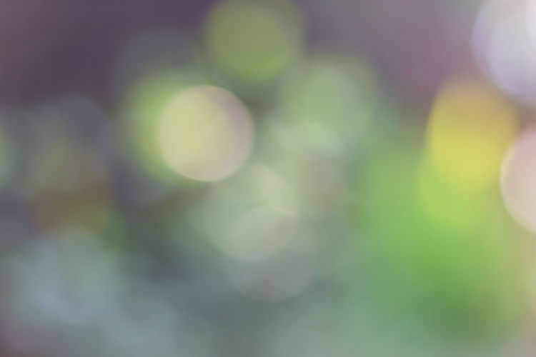 Abstract Blurred green light bokeh background Defocused Lens Flare No People Full Frame Selective Focus Close-up Backgrounds Green Color Day Nature Beauty In Nature Outdoors Growth Circle Abstract Plant Geometric Shape Pattern Focus On Foreground Tranquility Soft Focus