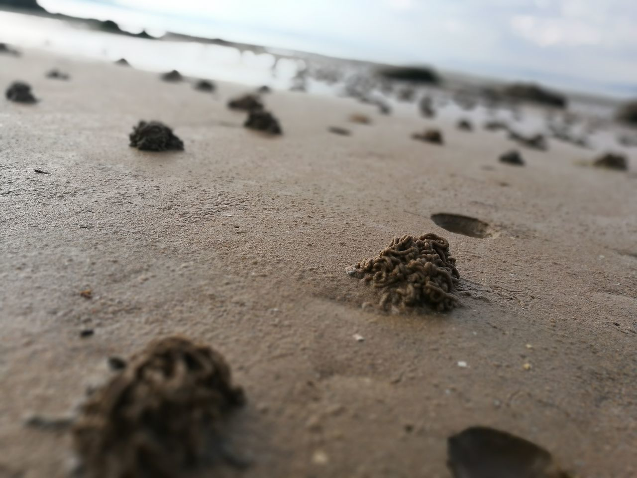 sand, beach, shore, nature, selective focus, outdoors, day, sky, no people, tranquility, beauty in nature, sea, close-up, sand dune, horizon over water, animal themes