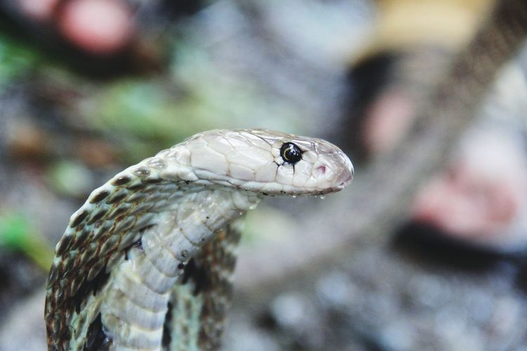 Close-up of snake on ground