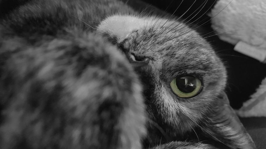 Change your perspective. One Animal Animal Body Part Animal Themes Domestic Animals Animal Eye Domestic Cat Close-up Pets Feline Nature Animal Black & White Blackandwhite Cat Lovers Cats Of EyeEm