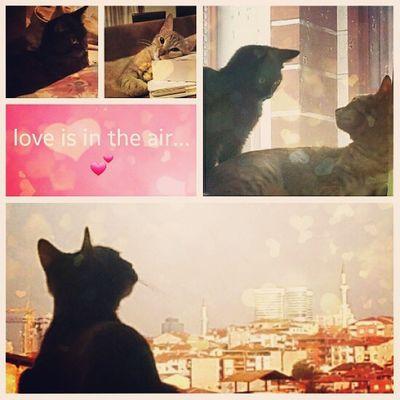 Instacat Cat Catlover Ilovemycat Photooftheday Picoftheday Cute Bestoftheday Igers Catoftheday Istanbul Romantic Romance Cats