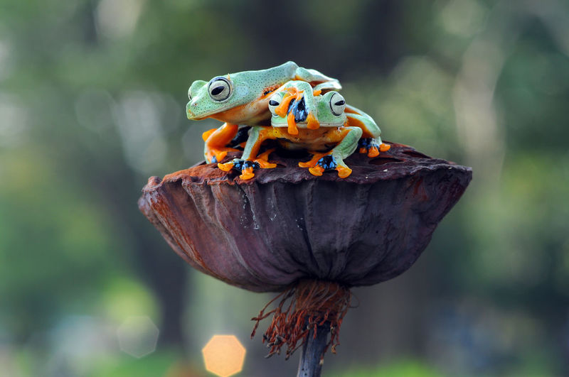 Close-Up Of Frogs On Flower