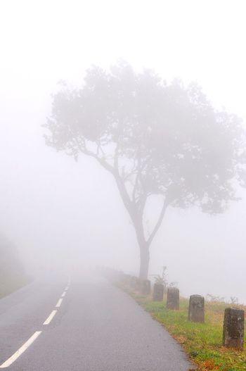 Tree Fog Winter